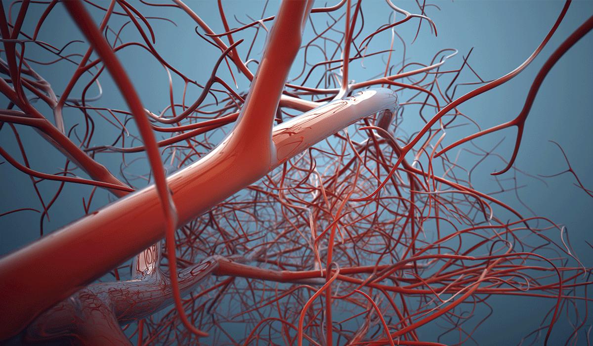 Sistema venoso